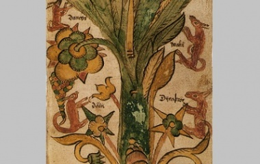 The four stags of Yggdrasil