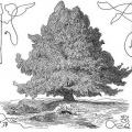 The world tree Yggdrasil