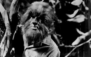 Werewolf, a shapeshifter