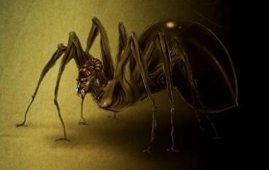 Anansi - Spider in African Folktale | Mythology net