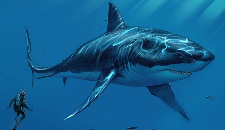 Megalodon - Description, History, Myths & Interpretations