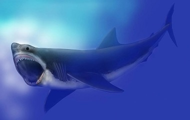 Megalodon looks like great white shark