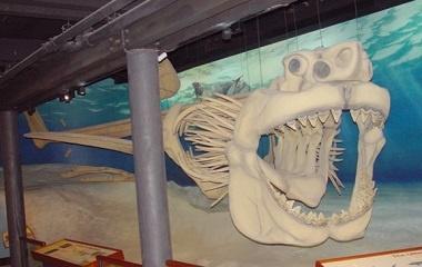 Megalodon skeleton, Calvert Marine Museum, Maryland
