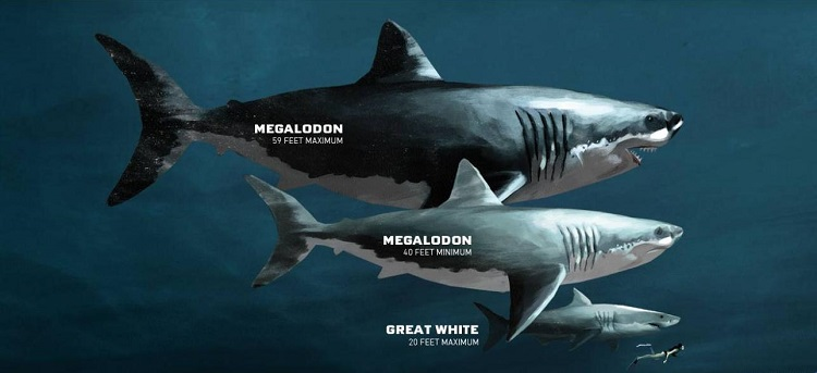 Megalodon vs Great White Shark