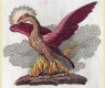Phoenix, 1728