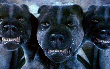 Cerberus in Harry Potter