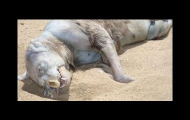 Montauk monster 2