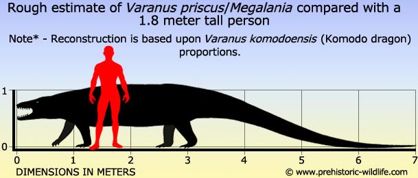 Megalania size