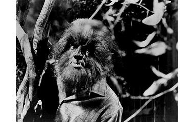 Werewolf in a drama (1969)