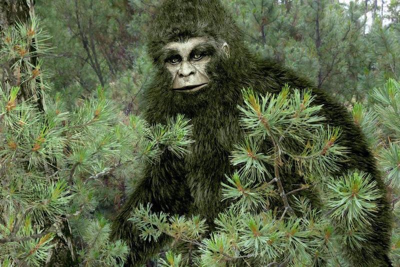 Yeti or Bigfoot