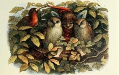 Elf and Owls, illustration